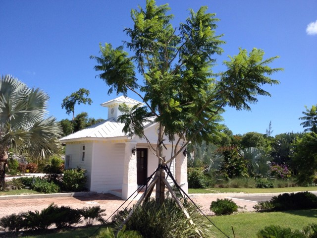 /listing-waterloo-cut-off-west-bay-street-11778.html from Coldwell Banker Bahamas Real Estate