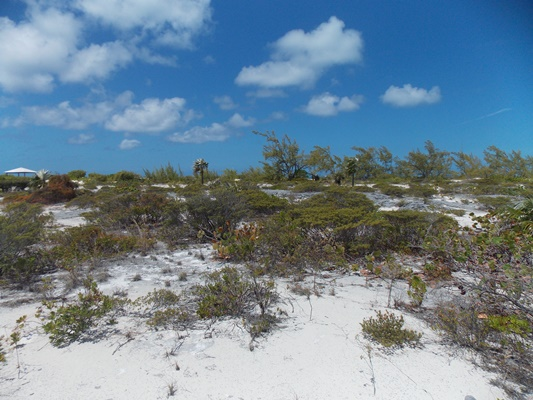 /listing-beautiful-beach-front-lot-12755.html from Coldwell Banker Bahamas Real Estate