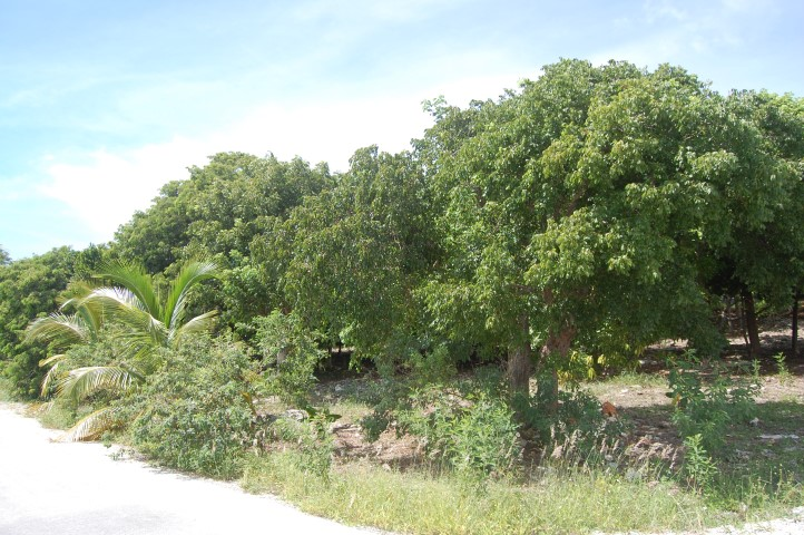 /listing-russell-island-lots-13605.html from Coldwell Banker Bahamas Real Estate