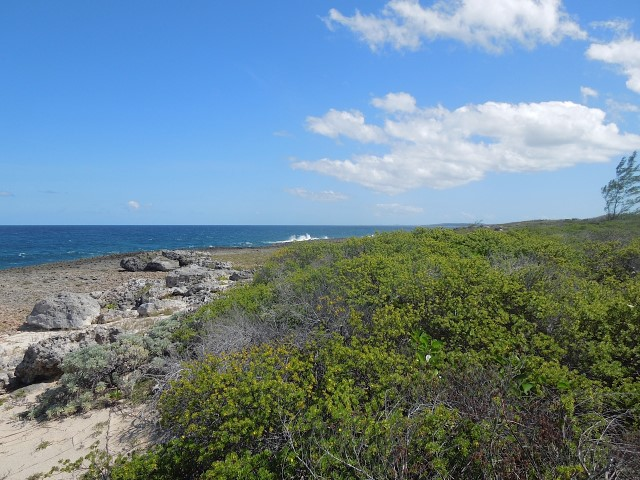 /listing-ideal-for-a-vacation-home-16200.html from Coldwell Banker Bahamas Real Estate
