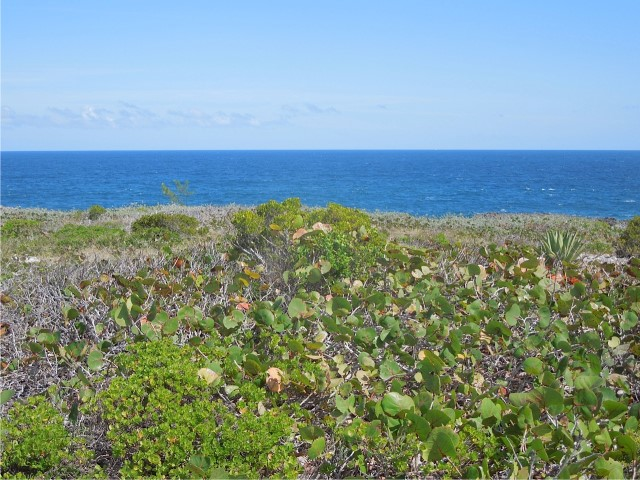 /listing-whale-point-lot-150a-16260.html from Coldwell Banker Bahamas Real Estate