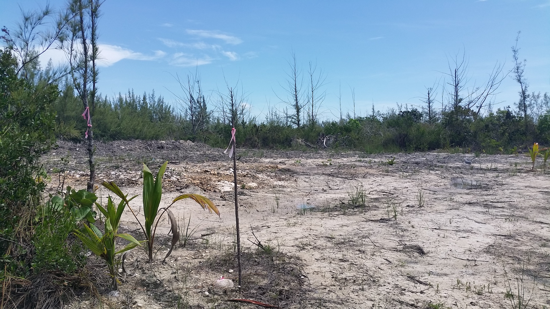 /listing-vacant-property-16792.html from Coldwell Banker Bahamas Real Estate