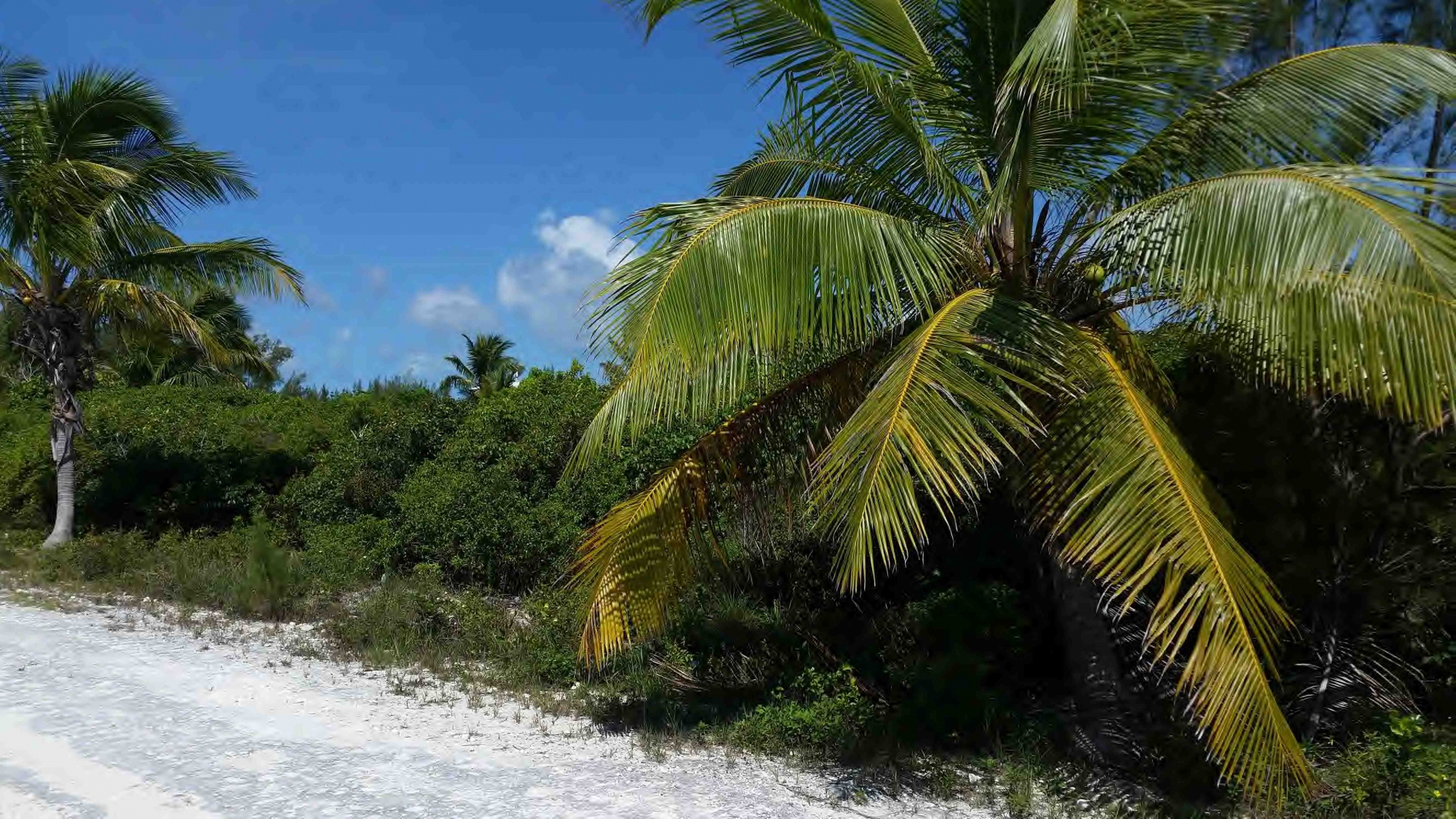 /listing-ocean-view-lot-16799.html from Coldwell Banker Bahamas Real Estate