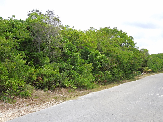 /listing-oleander-gardens-lot-19-21428.html from Coldwell Banker Bahamas Real Estate