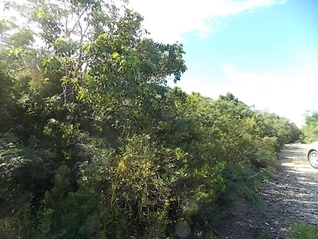 /listing-vacant-land-23051.html from Coldwell Banker Bahamas Real Estate