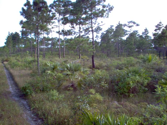 /listing-bahama-pines-subdivision-2594.html from Coldwell Banker Bahamas Real Estate