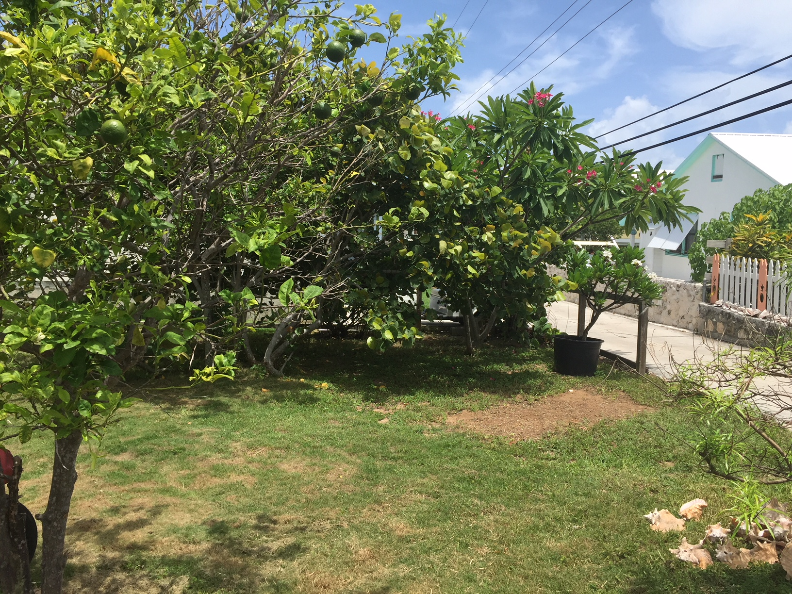 Man O War Cay land for sale with fruit trees sour oranges frangipani