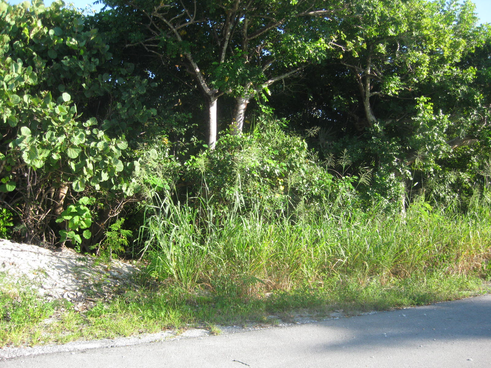 Ocean View Lot for sale in Green Turtle Estates