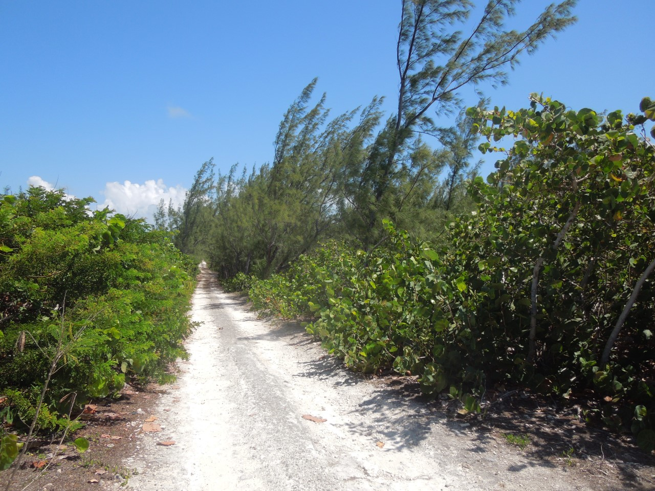 /listing-whale-point-lot-n-31820.html from Coldwell Banker Bahamas Real Estate