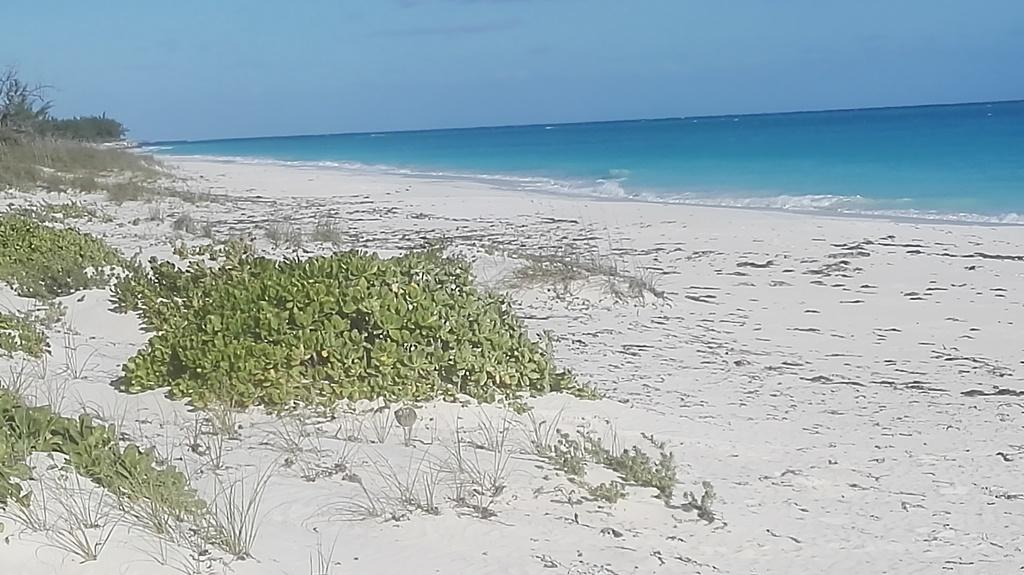 /listing-multifamily-lot-563-near-moss-town-airport-33238.html from Coldwell Banker Bahamas Real Estate