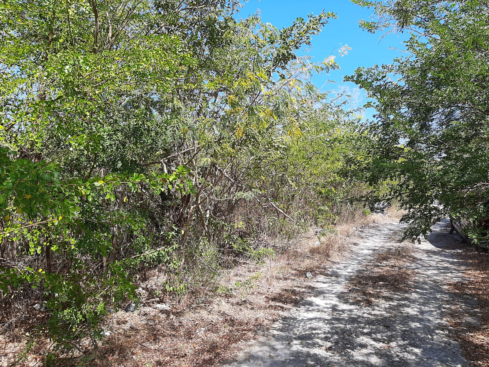 /listing-lot-6880-bsd-9east-36056.html from Coldwell Banker Bahamas Real Estate