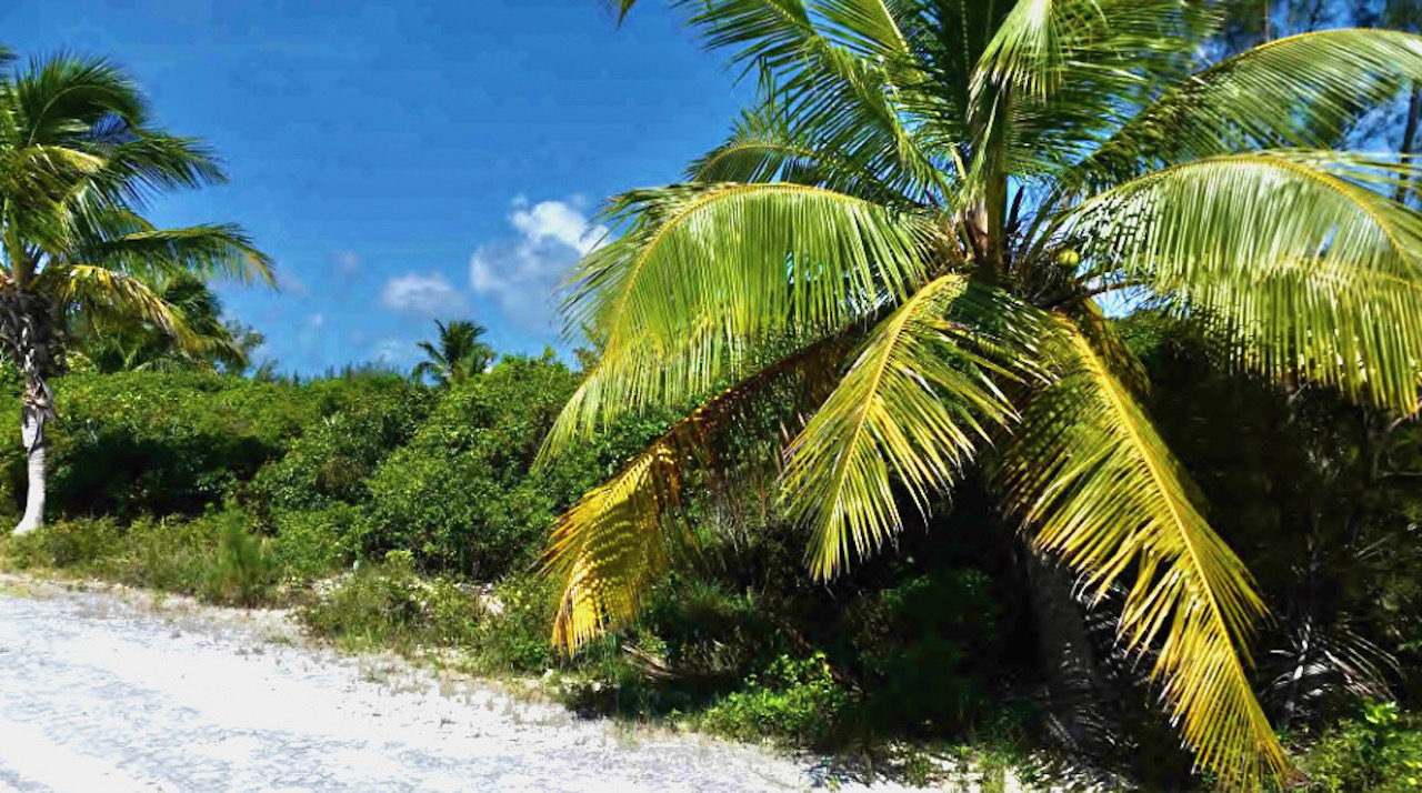 bahama-palm-shores-vacant-oceanview-lot-abaco-real-estate-6