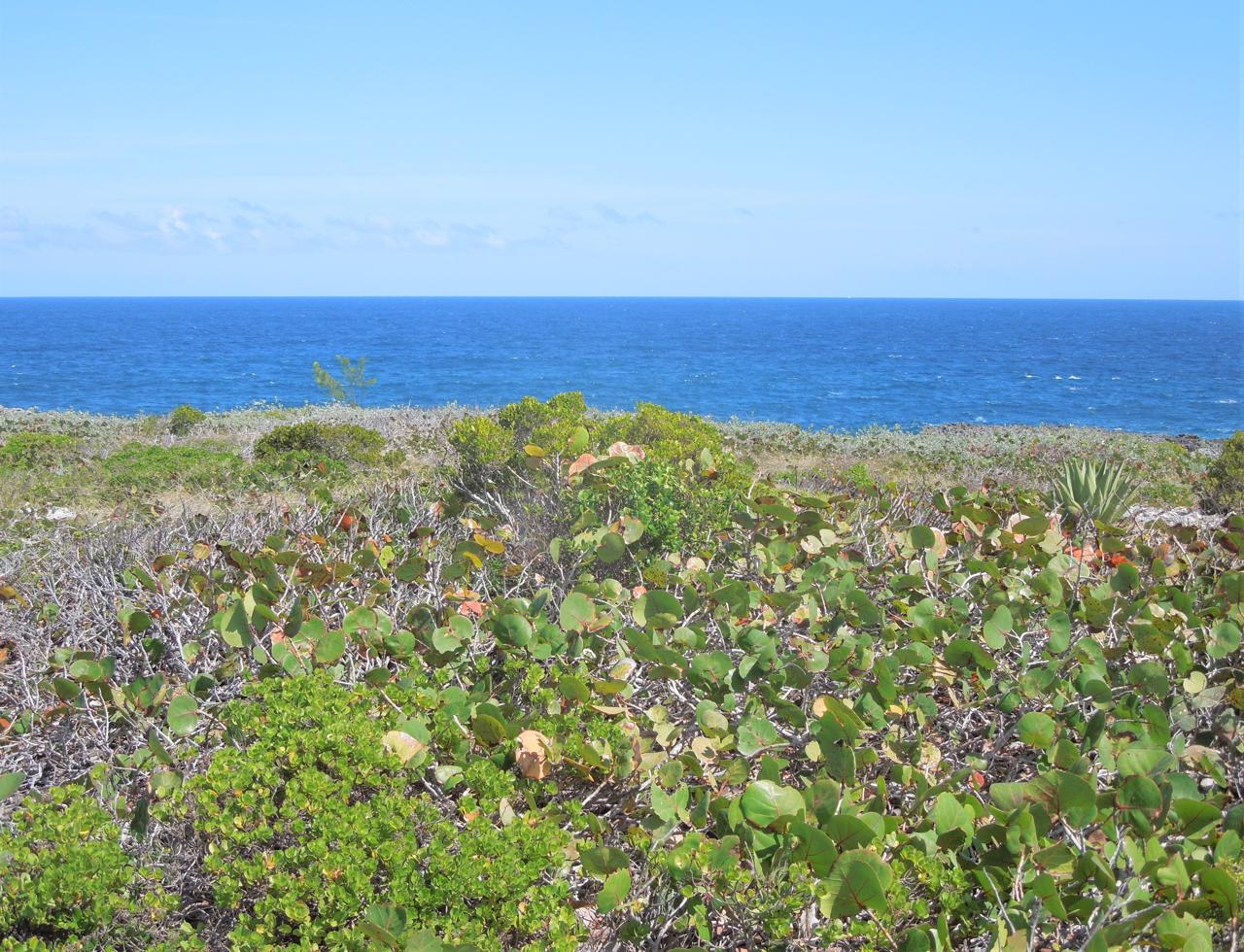 /listing-eleuthera-ocean-front-lot-for-sale-36742.html from Coldwell Banker Bahamas Real Estate