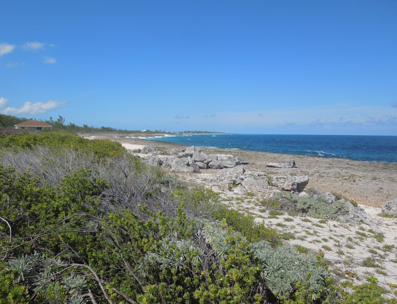 /listing-eleuthera-ocean-front-acreage-for-sale-37114.html from Coldwell Banker Bahamas Real Estate
