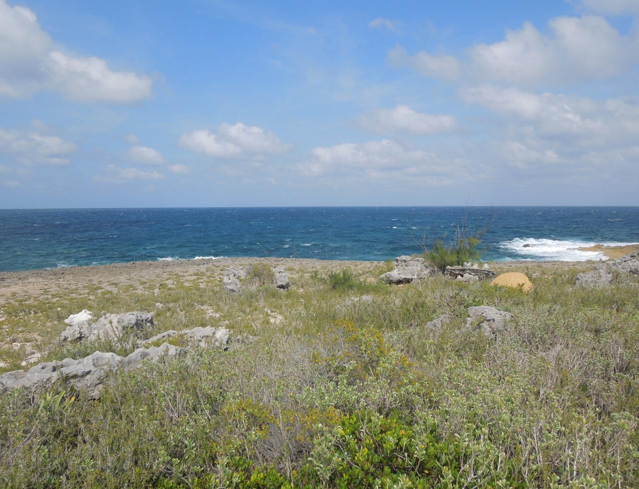 /listing-eleuthera-waterfront-acreage-for-sale-37225.html from Coldwell Banker Bahamas Real Estate