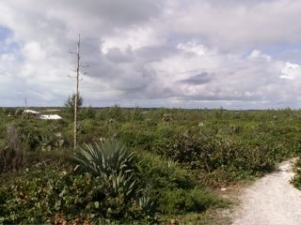 /listing-whale-point-lot-848.html from Coldwell Banker Bahamas Real Estate