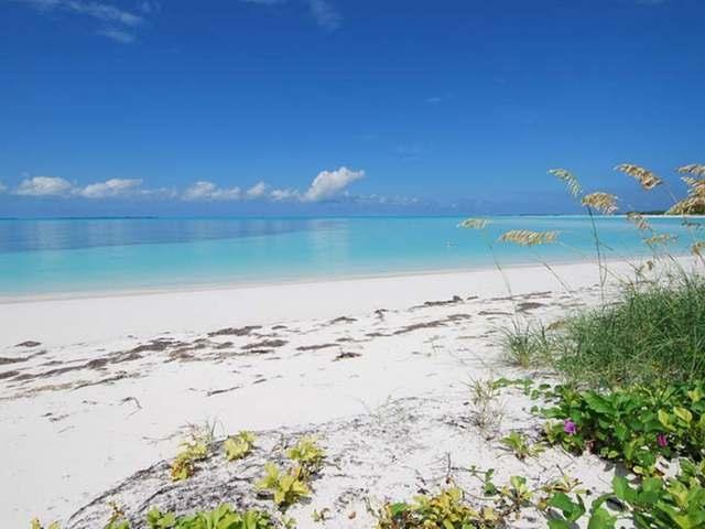 Treasure Island Leasing
