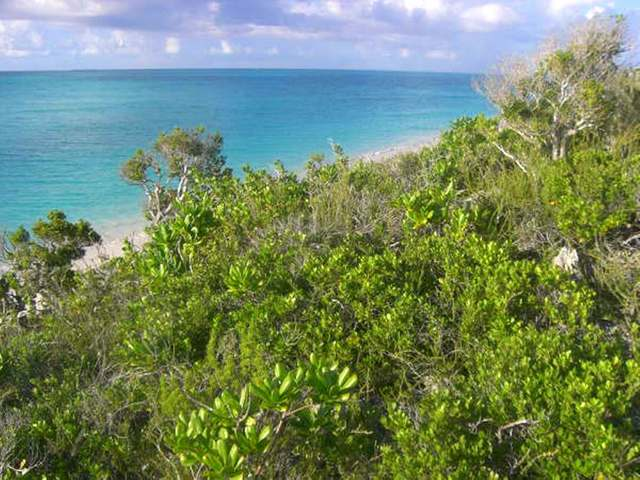 /listing-lots-acreage-in-rose-island-23359.html from Coldwell Banker Bahamas Real Estate