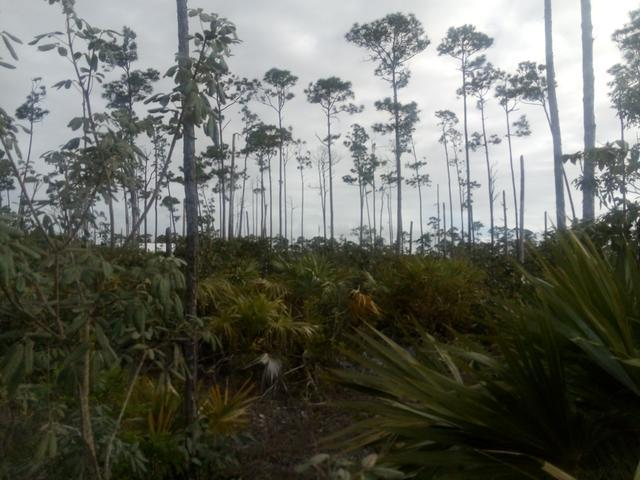 /listing-lots-acreage-in-chesapeake-28898.html from Coldwell Banker Bahamas Real Estate