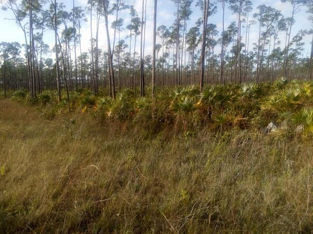 /listing-lots-acreage-in-chesapeake-29179.html from Coldwell Banker Bahamas Real Estate